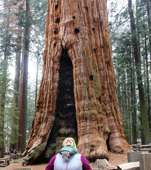 Burn it down so you can build anew – what I learned from the Giant Sequoias.
